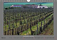 Strukturen im Weinbau (Wandkalender 2019 DIN A4 quer) - Produktdetailbild 3