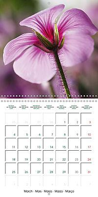 Stunning Flower Portraits (Wall Calendar 2019 300 × 300 mm Square) - Produktdetailbild 3