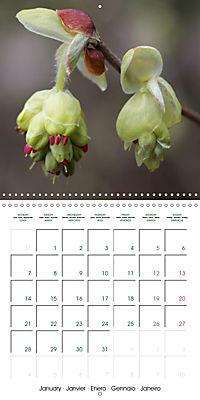 Stunning Flower Portraits (Wall Calendar 2019 300 × 300 mm Square) - Produktdetailbild 1