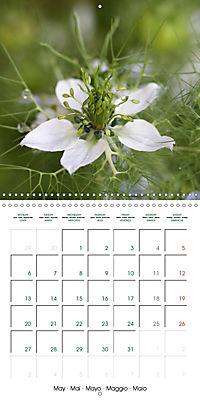 Stunning Flower Portraits (Wall Calendar 2019 300 × 300 mm Square) - Produktdetailbild 5