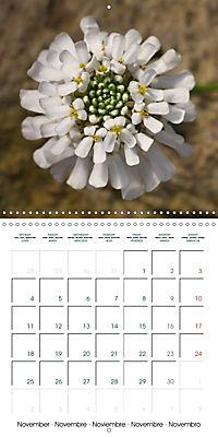 Stunning Flower Portraits (Wall Calendar 2019 300 × 300 mm Square) - Produktdetailbild 11