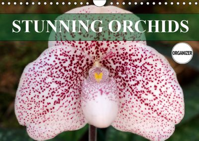 Stunning Orchids (Wall Calendar 2019 DIN A4 Landscape), Gisela Kruse