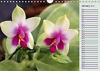 Stunning Orchids (Wall Calendar 2019 DIN A4 Landscape) - Produktdetailbild 1