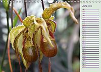Stunning Orchids (Wall Calendar 2019 DIN A4 Landscape) - Produktdetailbild 6