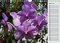 Stunning Orchids (Wall Calendar 2019 DIN A4 Landscape) - Produktdetailbild 4