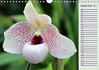 Stunning Orchids (Wall Calendar 2019 DIN A4 Landscape) - Produktdetailbild 9