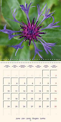 Stunning Spring Flowers (Wall Calendar 2019 300 × 300 mm Square) - Produktdetailbild 6