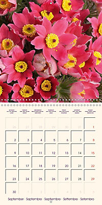 Stunning Spring Flowers (Wall Calendar 2019 300 × 300 mm Square) - Produktdetailbild 9
