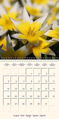 Stunning Spring Flowers (Wall Calendar 2019 300 × 300 mm Square) - Produktdetailbild 8