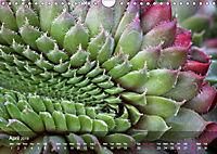 Succulent Dreams (Wall Calendar 2019 DIN A4 Landscape) - Produktdetailbild 4