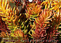 Succulent Dreams (Wall Calendar 2019 DIN A4 Landscape) - Produktdetailbild 3