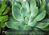 Succulent Dreams (Wall Calendar 2019 DIN A4 Landscape) - Produktdetailbild 6