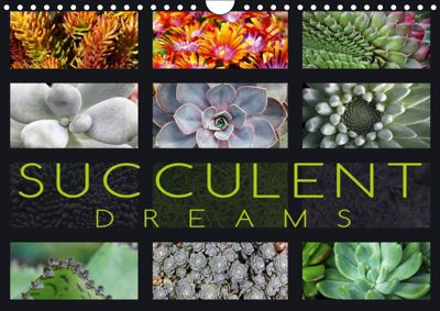 Succulent Dreams (Wall Calendar 2019 DIN A4 Landscape), Martina Cross
