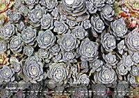 Succulent Dreams (Wall Calendar 2019 DIN A4 Landscape) - Produktdetailbild 8