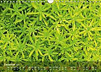 Succulent Dreams (Wall Calendar 2019 DIN A4 Landscape) - Produktdetailbild 12