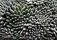 Succulent Dreams (Wall Calendar 2019 DIN A4 Landscape) - Produktdetailbild 11