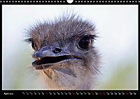 SÜDAFRIKA Augenblicke (Wandkalender 2019 DIN A3 quer) - Produktdetailbild 4