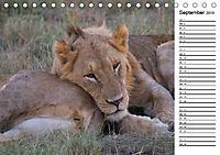 Südafrika - Big 5 und mehr (Tischkalender 2019 DIN A5 quer) - Produktdetailbild 9