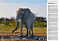 Südafrika - Big 5 und mehr (Tischkalender 2019 DIN A5 quer) - Produktdetailbild 12