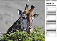 Südafrika - Big 5 und mehr (Wandkalender 2019 DIN A2 quer) - Produktdetailbild 2