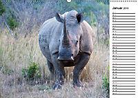 Südafrika - Big 5 und mehr (Wandkalender 2019 DIN A2 quer) - Produktdetailbild 1