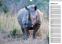 Südafrika - Big 5 und mehr (Wandkalender 2019 DIN A3 quer) - Produktdetailbild 1