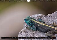 Südafrika - Lesotho (Wandkalender 2019 DIN A4 quer) - Produktdetailbild 6