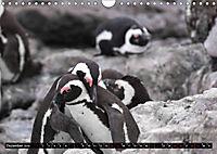 Südafrika - Lesotho (Wandkalender 2019 DIN A4 quer) - Produktdetailbild 12
