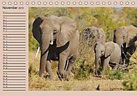 Südafrika - Planer (Tischkalender 2019 DIN A5 quer) - Produktdetailbild 11