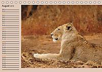 Südafrika - Planer (Tischkalender 2019 DIN A5 quer) - Produktdetailbild 8