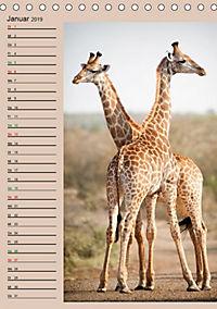 Südafrika und seine Tierwelt (Tischkalender 2019 DIN A5 hoch) - Produktdetailbild 1