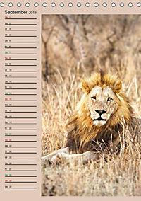 Südafrika und seine Tierwelt (Tischkalender 2019 DIN A5 hoch) - Produktdetailbild 9