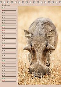 Südafrika und seine Tierwelt (Tischkalender 2019 DIN A5 hoch) - Produktdetailbild 6