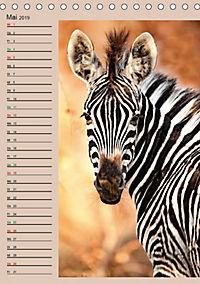 Südafrika und seine Tierwelt (Tischkalender 2019 DIN A5 hoch) - Produktdetailbild 5