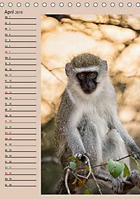 Südafrika und seine Tierwelt (Tischkalender 2019 DIN A5 hoch) - Produktdetailbild 4
