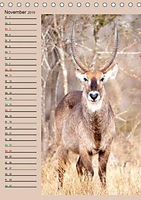 Südafrika und seine Tierwelt (Tischkalender 2019 DIN A5 hoch) - Produktdetailbild 11