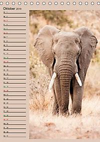 Südafrika und seine Tierwelt (Tischkalender 2019 DIN A5 hoch) - Produktdetailbild 10