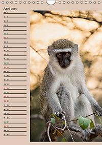 Südafrika und seine Tierwelt (Wandkalender 2019 DIN A4 hoch) - Produktdetailbild 4