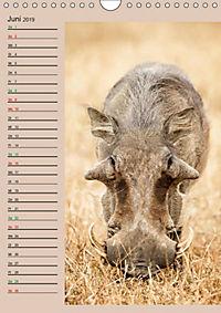 Südafrika und seine Tierwelt (Wandkalender 2019 DIN A4 hoch) - Produktdetailbild 6