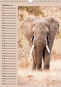 Südafrika und seine Tierwelt (Wandkalender 2019 DIN A4 hoch) - Produktdetailbild 10