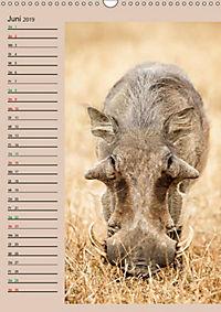 Südafrika und seine Tierwelt (Wandkalender 2019 DIN A3 hoch) - Produktdetailbild 6