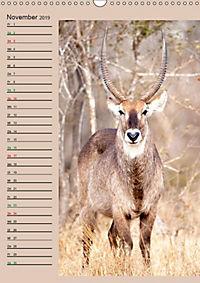 Südafrika und seine Tierwelt (Wandkalender 2019 DIN A3 hoch) - Produktdetailbild 11