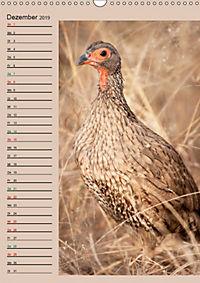 Südafrika und seine Tierwelt (Wandkalender 2019 DIN A3 hoch) - Produktdetailbild 12