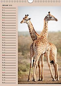 Südafrika und seine Tierwelt (Wandkalender 2019 DIN A4 hoch) - Produktdetailbild 1