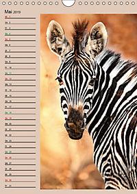 Südafrika und seine Tierwelt (Wandkalender 2019 DIN A4 hoch) - Produktdetailbild 5