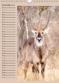 Südafrika und seine Tierwelt (Wandkalender 2019 DIN A4 hoch) - Produktdetailbild 11