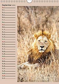 Südafrika und seine Tierwelt (Wandkalender 2019 DIN A4 hoch) - Produktdetailbild 9