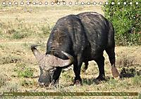 Südafrika - Von Kapstadt bis Addo Elephant Park (Tischkalender 2019 DIN A5 quer) - Produktdetailbild 6