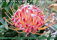 Südafrika - Von Kapstadt bis Addo Elephant Park (Tischkalender 2019 DIN A5 quer) - Produktdetailbild 10