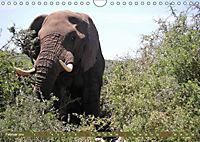 Südafrika - Von Kapstadt bis Addo Elephant Park (Wandkalender 2019 DIN A4 quer) - Produktdetailbild 2